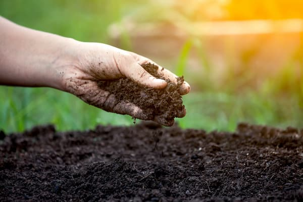 Cải tạo đất trồng cây đơn giản với các mẹo này | Kieufarm